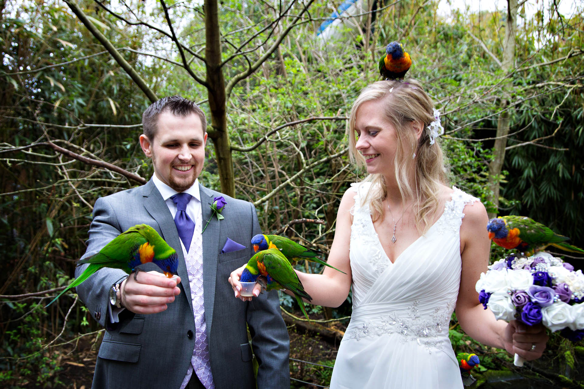 spring wedding at bristol zoo bristol zoo wedding