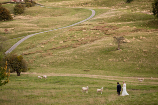 wedding couple walking on the field with sheep looking at them at kingscote barn in the Cotswolds
