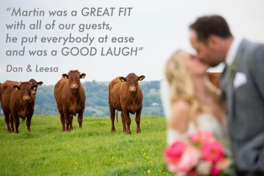 wedding couple kissing with a cows looking at them behind them